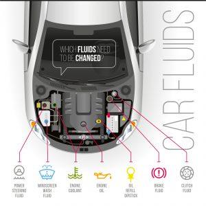 Parts of the car cartoon