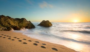 Cowell Ranch Beach, California