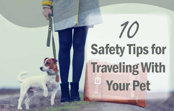 10 Safety Tips for Traveling with Pet