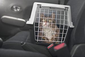 Cat in carrier