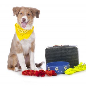 Dog with food and toys